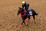 DEL MAR, CA - NOVEMBER 01: Sharp Azteca, owned by Gelfenstein Farm and trained by Jorge Navarro, exercises in preparation for the Breeders' Cup Las Vegas Dirt Mile at Del Mar Thoroughbred Club on November 1, 2017 in Del Mar, California. (Photo by Sue Kawczynski/Eclipse Sportswire/Breeders Cup)