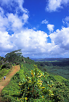 Hikers explore the Kuilau Ridge Trail
