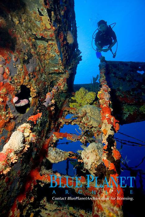 scuba diver explores shipwreck, Rosa Maria wreck, St. Croix, U.S. Virgin Islands, USVI, Caribbean, Atlantic