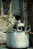 Kitten plays in window sill. Italian Alps Switzerland Europe.