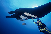 diver holding onto remora attached to a giant oceanic manta ray, Mobula birostris, formerly Manta birostris, The Broiler, Isla San Bendicto, Revillagigedos islands, Mexico, Pacific Ocean