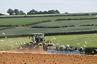 29-7-2021 Ploughing barley stubble in Rutland <br /> ©Tim Scrivener Photographer 07850 303986<br />      ....Covering Agriculture In The UK....