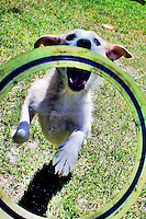 Willow the dog plays with a firs bee in her backyard in Holly Hill, Florida (Photo by Brian Cleary/www.bcpix.com)