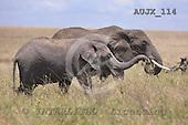Dr. Xiong, ANIMALS, wildlife, photos, AUJX114,#a#