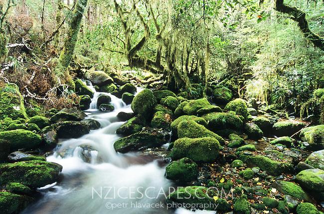 An unnamed stream on the Wangapeka Track - Kahurangi National Park