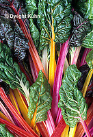 HS80-005z  Bright Lights Swiss Chard or Multicolor Chard
