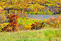 00440-011.06 Fall Color: Mix of mostly oak, aspen and birch are in peak of color.  Small lake in background. Mix of wildlife habitat. Brilliant, colorful.