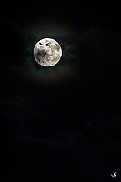 A Cessna airplane against a full moon