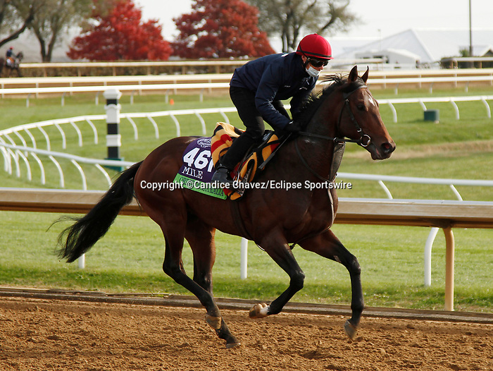 Order Of Australia, trained by trainer Aidan P. O'Brien, exercises in preparation for the Breeders' Cup Mile at Keeneland Racetrack in Lexington, Kentucky on November 5, 2020.