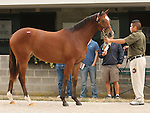 11 September 2010.  Hip #81  Proud Citizen - Pacific Spell filly, consigned by Brereton C. Jones.