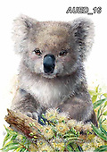 Carlie, REALISTIC ANIMALS, REALISTISCHE TIERE, ANIMALES REALISTICOS, paintings+++++,AUED16,#A#, EVERYDAY,koala,koalas ,australian wildlife