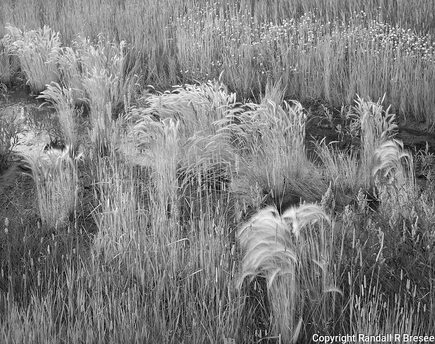 """""""Grass In A Garbage Dump""""<br /> <br /> Beauty can be found nearly anywhere. This photograph shows beautiful grass that grew in a low, wet corner of a municipal garbage dump."""