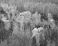 """Grass In A Garbage Dump""<br />