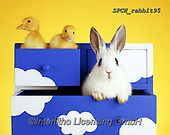 ANIMALS, REALISTISCHE TIERE, ANIMALES REALISTICOS, photos+++++,SPCHRABBIT95,#a#, EVERYDAY ,rabiit,rabbits,