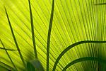 Europa, DEU, Deutschland, Nordrhein Westfalen, NRW, Ruhrgebiet, Bochum, Ruhr-Uni, Botanischer Garten, Pflanze, Blatt, Detail, Kategorien und Themen, Natur, Umwelt, Pflanzen, Pflanzenkunde, Botanik, Biologie, <br /> <br /> [Fuer die Nutzung gelten die jeweils gueltigen Allgemeinen Liefer-und Geschaeftsbedingungen. Nutzung nur gegen Verwendungsmeldung und Nachweis. Download der AGB unter http://www.image-box.com oder werden auf Anfrage zugesendet. Freigabe ist vorher erforderlich. Jede Nutzung des Fotos ist honorarpflichtig gemaess derzeit gueltiger MFM Liste - Kontakt, Uwe Schmid-Fotografie, Duisburg, Tel. (+49).2065.677997, <br /> archiv@image-box.com, www.image-box.com]
