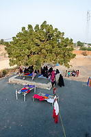 India, Gujarat, Bhadroi, Kutch Desert. Pabiben's employees sewing fabric for her textile bag business under the tree.