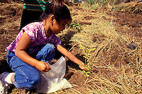 children planting koa with hands