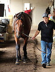 May18, 2015  American Pharoah returned to Churchill Downs following his win in the Preakness Stakes shown with assistant trainer Jimmy Barnes.)  He will prepare for the Belmont Stakes in New York on June 6. Owner Zayat Stables, trainer Bob Baffert. By Pioneerof The Nile x Littleprincessemma (Yankee Gentleman.) ©Mary M. Meek/ESW/CSM