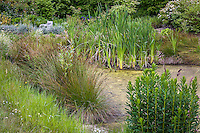 Reeds (Juncus) and Iris plant water filtration in bio pond at Digging Dog Nursery