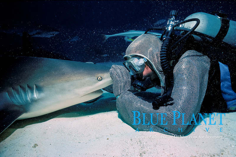 shark handler holds Caribbean reef shark, Carcharhinus perezii, face-to-face in a hypnotic trance, Bahamas, Caribbean, Atlantic