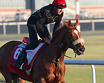 Dice Flavor (USA) works out on March 29th, 2013 at Meydan Racecourse