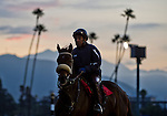 October 26, 2014: Scenes from around the track as horses exercise in preparation for the Breeders' Cup at Santa Anita Race Course in Arcadia, California on October 26, 2014. Scott Serio/ESW/CSM