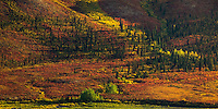 Layers of fall color in Tombstone Valley, Yukon Territory.