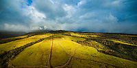 A red dirt road cuts through golden fields as rain clouds converge in the distance in this aerial view of Kaua'i.