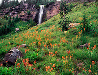 Crooked Creek Falls and Indian Paintbrush. Bird Creek Meadows, Washington.