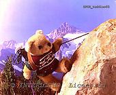 Xavier, CUTE ANIMALS, teddies, photos, SPCHTEDDIES03,#ac#