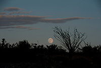 Moonrise in Anza Borrego.