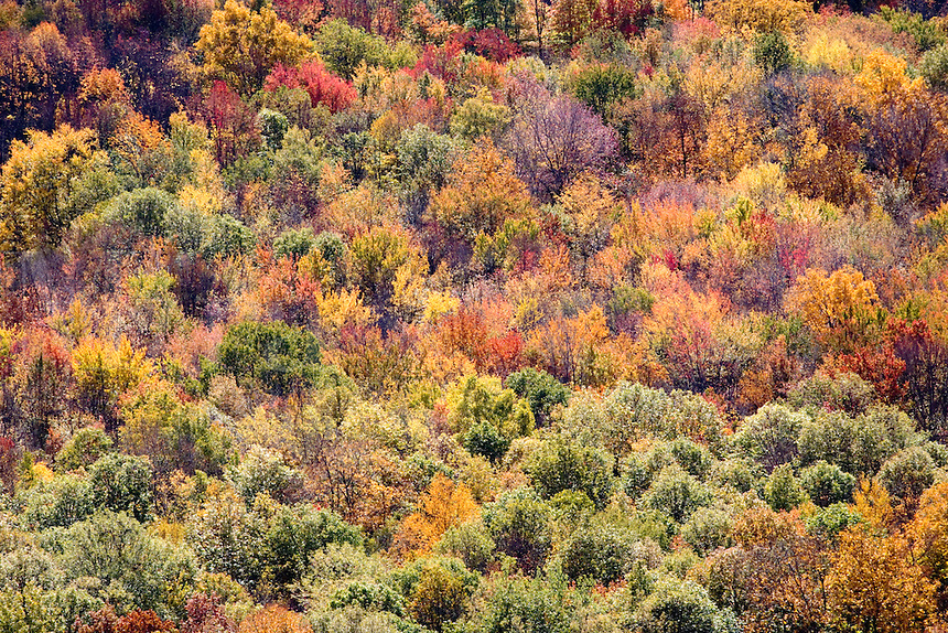 A scenic view of an Autumn Day surrounded by the changing leaves and all the colors.