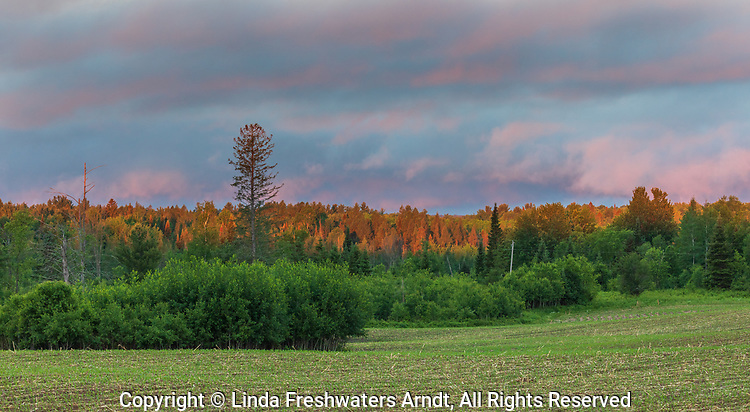 Early morning light illuminating the trees behind a farmer's field in northern Wisconsin.
