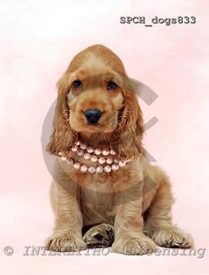 Xavier, ANIMALS, dogs, photos, SPCHDOGS833,#a# Hunde, perros