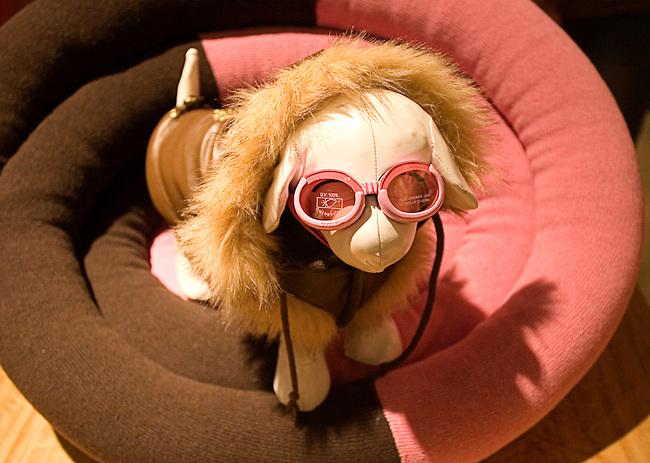 Lush Puppy Pet Store, Las Vegas, Nevada