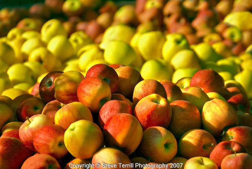 Bins of apples at farmers market