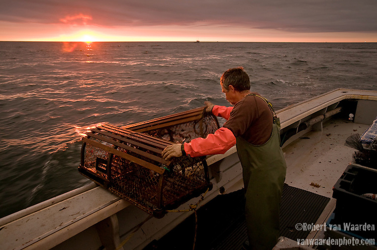 Bobby pushes the traps back in the water during the spring fisshing season in Prince Edward Island.