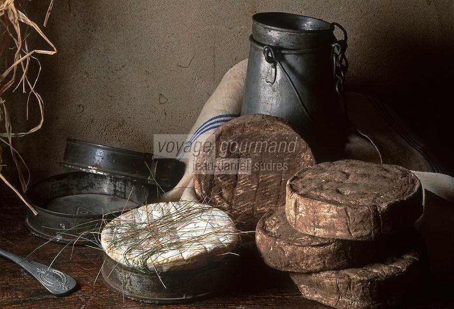 Europe/France/Centre/45/Loiret: L'olivet cendré, un fromage local fabriqué à partir de lait de vache - Fromage artisanal à pâte  molle non pressée  et on cuite // France, Loiret, Olivet Cendre, local cheese made of milk's cow, home made cheese