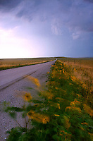 Blurred flowers along roadway<br />