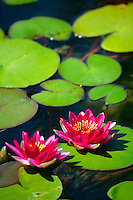 The Lily Pond in front of the Botanical Building, Balboa Park, San Diego, California