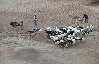 BURKINA FASO, Kaya, cattle herder with goats search for water / Tierherde in einem trockenem Flussbett