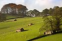 Fields near Chatsworth, Peak DIstrict National Park, UK.