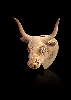 Minoan  bull's head rhython libation vessel, Gournia 1600-1450 BC; Heraklion Archaeological  Museum. , black background