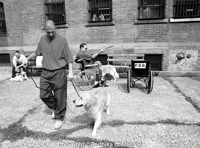 BEACON, NEW YORK-AUGUST 15:  Andy works with Rezzie during class for the Puppies Behind Bars (PPB) program at Fishkill Correctional Facility August 15, 2008. The training program which prepares puppies to be service dogs consists of one day of class a week on topics such as obedience training, grooming, basic care of the dogs. The dogs spend 18-24 months in the program working with the prisoners.