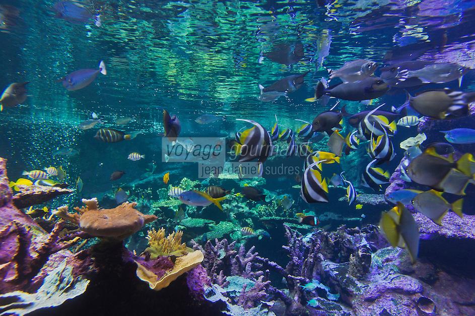 Europe/France/Normandie/Basse-Normandie/50/Cherbourg:  La Cité de la Mer, Parc scientifique et ludique<br /> L'aquarium abyssal: Dans ce grand bassin représentant  un atoll corallien évoluent plus de 3500 poissons: Cocher solitaire -Poisson papillon //  France, Manche, Cotentin, Cherbourg, museum Cite de la Mer (city of the sea),  Aquarium