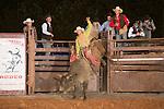 SEBRA - Blackstone, VA - 9.29.2013 - Bulls & Action