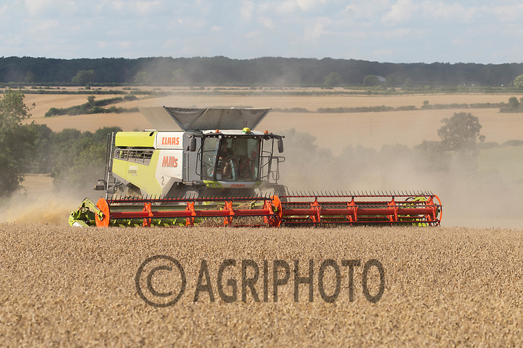 10-8-2021 Harvesting Winter wheat in Rutland<br /> ©Tim Scrivener Photographer 07850 303986<br />      ....Covering Agriculture In The UK....