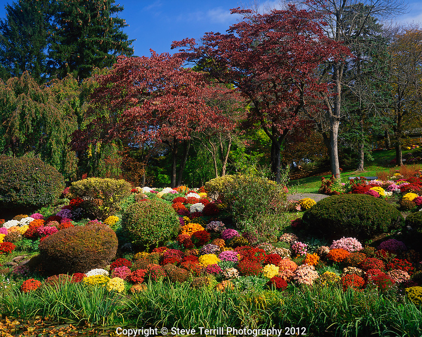 USA, New York, autumn display of chrysanthemum flowers in Seamon Park located in Village of Saugerties