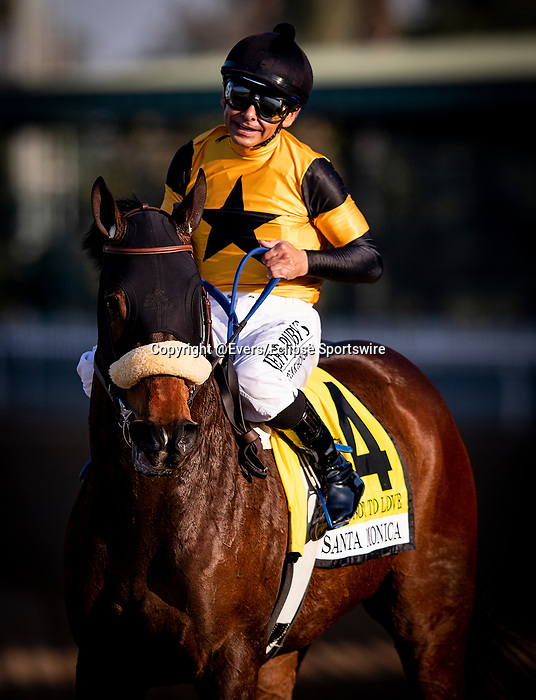 """FEB 15: The """"one-eyed-filly"""" Hard not to Love with Mike Smith wins the Santa Monica Stakes at Santa Anita Park in Arcadia, California on Feb 15, 2020. Evers/Eclipse Sportswire/CSM"""