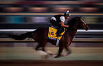 OCT 27: Breeders' Cup Classic entrant Yoshida, trained by William I. Mott, gallops at Santa Anita Park in Arcadia, California on Oct 27, 2019. Evers/Eclipse Sportswire/Breeders' Cup